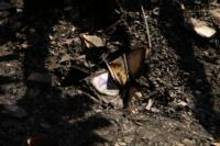 Сгоревший в Алексине дом, Фото: 9