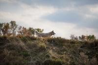 Золотая осень в Тульской области, Фото: 19