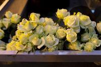 Миллион разных роз: как устроена цветочная теплица, Фото: 42