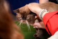 Выставка кошек в Искре, Фото: 87
