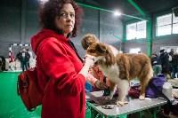 Выставка собак в Туле, Фото: 58