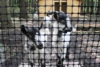 Обитатели мини-зоопарка Детского парка Новомосковска., Фото: 12