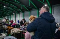 Выставка собак в Туле, Фото: 79