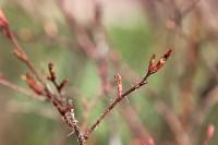 Краски весны в Туле, Фото: 15