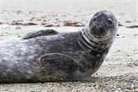 Жизнь тюленя: мечта!, Фото: 4