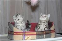 В Туле прошла международная выставка кошек, Фото: 66