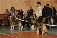 В Туле прошла всероссийская выставка собак, Фото: 37