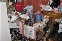 Похищенные собаки, Фото: 17