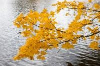 Золотая осень в Туле-2019, Фото: 13