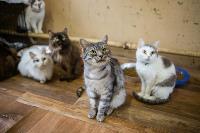 Волонтеры спасли кошек из адской квартиры, Фото: 49