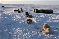 Репортаж с Северного Полюса, Фото: 48