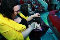 Елене Ваенге в Туле вернули собаку, Фото: 33