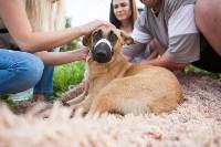 Спасение рядового пса, Фото: 7