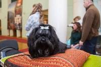 Всероссийская выставка собак 2017, Фото: 51