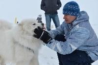 Праздник северных собак на Куликовом поле , Фото: 39