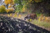 Золотая осень в Тульской области, Фото: 43