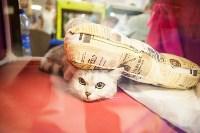 """Выставка """"Пряничные кошки"""". 15-16 августа 2015 года., Фото: 149"""