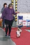 Выставка собак в Туле 26.01, Фото: 13