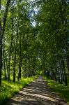 Летний день в Ясной Поляне, Фото: 37