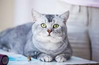 """Выставка """"Пряничные кошки"""". 15-16 августа 2015 года., Фото: 13"""