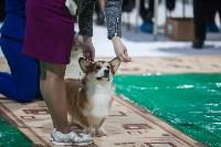 Выставка собак в Туле, Фото: 41