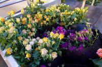 Миллион разных роз: как устроена цветочная теплица, Фото: 47