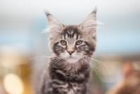 Выставка кошек в МАКСИ, Фото: 63