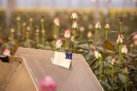 Как устроен розарий, Фото: 60