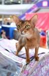 """Выставка """"Пряничные кошки"""" в ТРЦ """"Макси"""", Фото: 42"""
