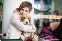 Выставка собак в Туле, 29.11.2015, Фото: 29