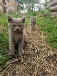 Тульские котики, Фото: 79