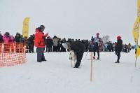 Праздник северных собак на Куликовом поле , Фото: 72