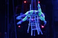 Aqua Show в Тульском цирке, Фото: 2