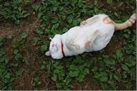 Самый ленивый кот, Фото: 4