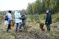 В Веневском районе высажено 24 тысячи сосен, Фото: 13