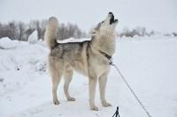 Праздник северных собак на Куликовом поле , Фото: 22