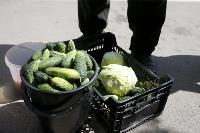 Незаконная торговля «с земли»: почему не все туляки хотят идти на рынки?, Фото: 28