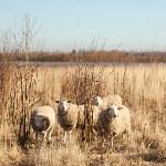 Семён Яблоновский и его ферма, Фото: 26