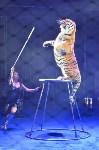 Цирковое шоу, Фото: 109
