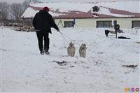 Куликово поле. Гонки на собачьих упряжках., Фото: 108