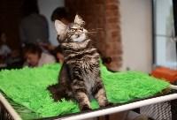 Выставка кошек в Искре, Фото: 16