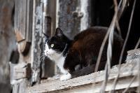 Тульские котики, Фото: 33
