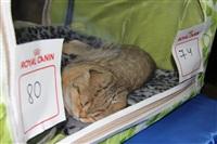 В Туле прошла международная выставка кошек, Фото: 11
