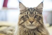 В Туле прошла выставка «Пряничные кошки» , Фото: 23