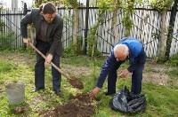 Во дворе Тульского областного краеведческого музея посадили сосны, Фото: 2