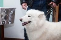 Всероссийская выставка собак 2017, Фото: 41