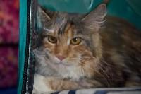 Выставка кошек в ГКЗ. 26 марта 2016 года, Фото: 28