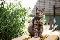 Тульские котики, Фото: 58