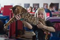Выставка кошек в ГКЗ. 26 марта 2016 года, Фото: 56