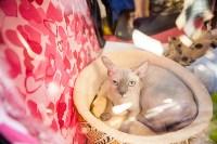 """Выставка """"Пряничные кошки"""". 15-16 августа 2015 года., Фото: 145"""